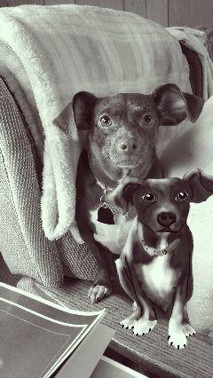 doggylove petsandanimals blackandwhitevintage love dog