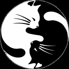 yinyang yingyang ying yang blackandwhite
