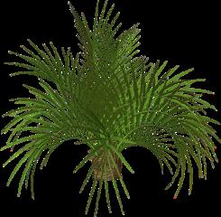 plant leaf green tumblr plante