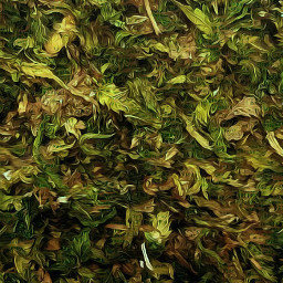 freetoedit green leaves