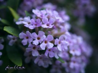blossom plant nature naturephotography