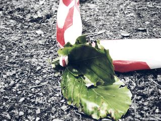 leaves absperrband ground colorsplash dodgereffect
