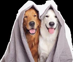 d freetoedit dog