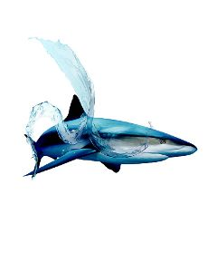 splash water shark danger oilpaintingeffect