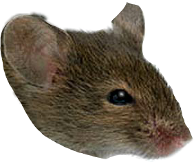 мышка freetoedit