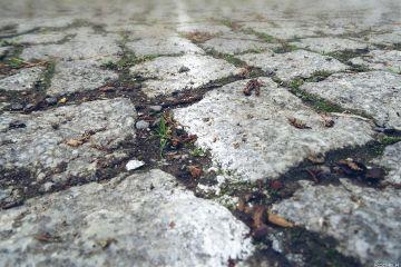 street cobblestone cobblestonestreet dodgers tiltshift freetoedit