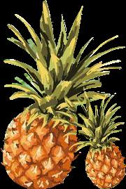 pineapples piñas summer summertime pi