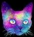 gatos galaxia freetoedit