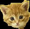 gatocute freetoedit
