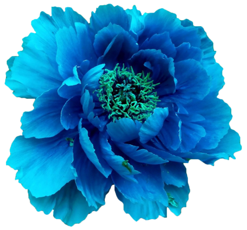 Ftestickers blue flower sticker by moon