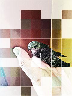 popart photography bird