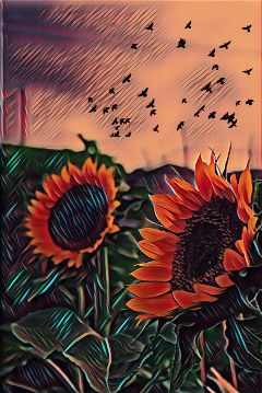 freetoedit badlandsmagiceffect summer2017 sunflowerfield flockstickerremix