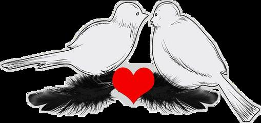 @nerdsrcool birds freetoedit