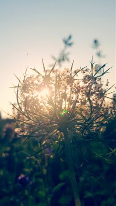 freetoedit photography nature flower sunset