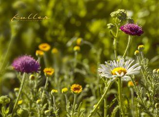 flowers nature focusonforeground summertime