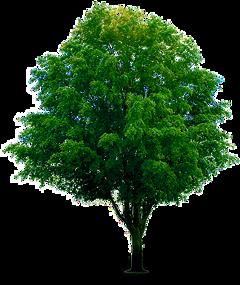 remix freestickers tree freetoedit