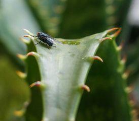 bug nature naturaleza macro closeup freetoedit