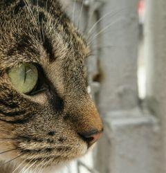 cat gato cute eyes greeneyes