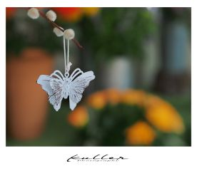decoration butterfly focusonforeground dpcbutterfly