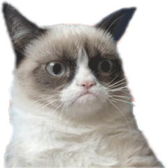 grumpy cat freetoedit
