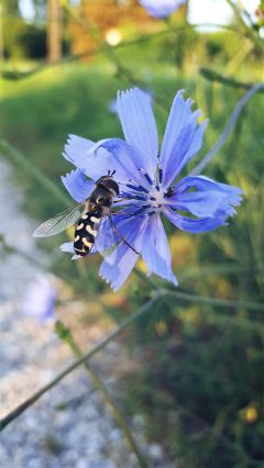 freetoedit photography nature bee flower