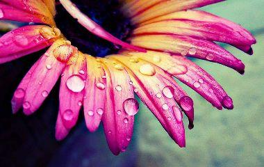 dpcpink waterdrops flower garden