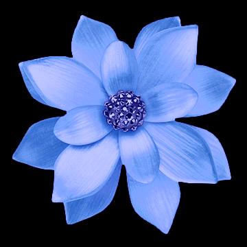 #flower #
