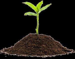 plant freetoedit