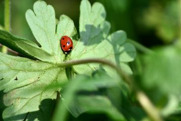 nature photography macro ladybugs emotion