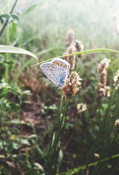 photography nature naturelover butterfly dpcbutterfly freetoedit