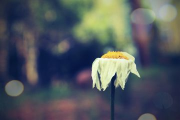 freetoedit bokeh emotions flower