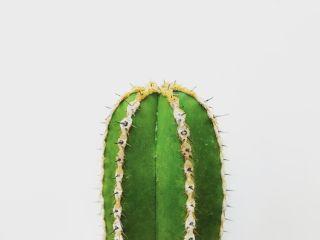 freetoedit cactus plant flower green