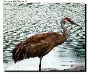 birds bird crane petsandanimals water
