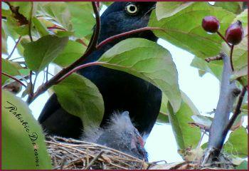 petsandanimals birds baby nest grackle