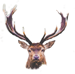 deer cute freetoedit