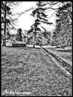 blackandwhite nature photographer artist trees