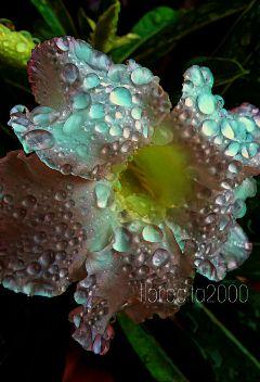 flower raindrops nature photography myphoto