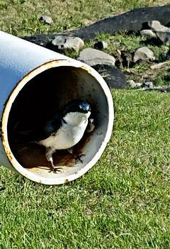 freetoedit pipe bird cute