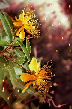 freetoedit flower photostory