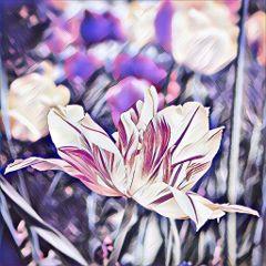 flower nature photography beautiful cute freetoedit