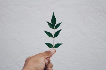 freetoedit leaf minimal human green