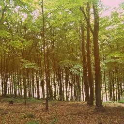 forrest forrestnature trees freetoedit