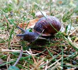 nature photography snail