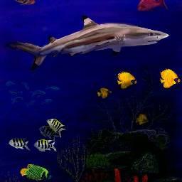 mydrawing myimagination noclipart blacktipreefshark shark wdpfish drawingtoolsonly drawing coralreef fish colorful ocean