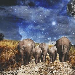 elephant lune galaxy nature animal freetoedit