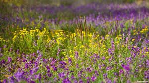 flower freetoedit nature photography