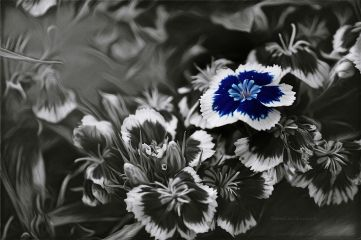 deeliriouss photography flower emotions mood