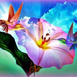 freetoedit remixedwithpicsart uniquesart birds hummingbirds