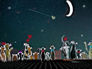 freetoedit colorful cute night starrysky