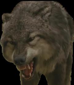 twilight paul wolf freetoedit